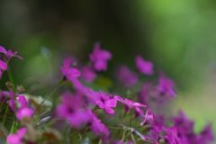 Purple flowers soft color background stock image