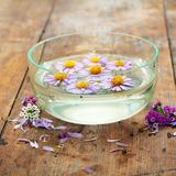Purple flowers spa. In glass bowl on wooden background Stock Photos