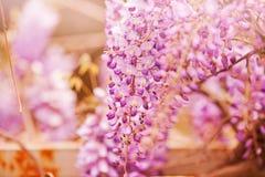 Purple flowers in spring Stock Image
