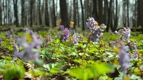 Purple flowers stay in the wind stock footage