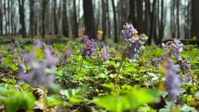 Purple flowers stay in the wind wide 2 stock footage