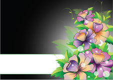 Purple flowers with strip on black background Royalty Free Stock Images