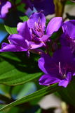 Purple flowers. In the summer Stock Photo