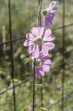 Purple flowers. Summer, day, light Stock Photography