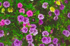 Purple flowers in sunny garden