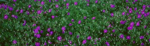 Purple Flowers, Taft Gardens, Ojai, California Stock Photo