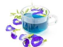 Purple flowers tea. Isolated on white Stock Photos