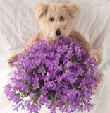Purple flowers with teddy bear Royalty Free Stock Photos