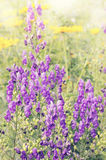 Purple flowers, tinted Royalty Free Stock Photography
