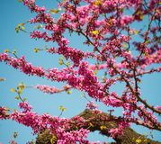 Purple flowers on tree Stock Photo