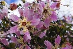 Purple flowers on a tree. Parks and gardens stock photos