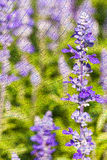Purple flowers on tree stump texture background. Royalty Free Stock Images