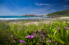Purple flowers at tropical beach of Seychelles. Stock Images