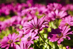 Purple flowers under the sun Royalty Free Stock Photography