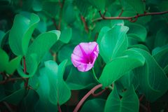 Purple flowers are usually lush green, usually growing on the be stock photos