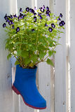 Purple flowers in a vase boots on a wall wood Stock Image