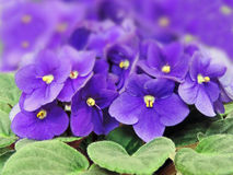 Purple flowers Stock Photos