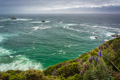 Purple flowers and view of the Pacific Ocean, in Big Sur  Stock Image