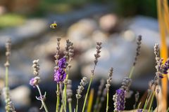 Purple flowers with wasp stock image