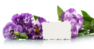 Purple flowers and white card Royalty Free Stock Photo