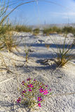 Purple flowers in white sand monument Royalty Free Stock Images