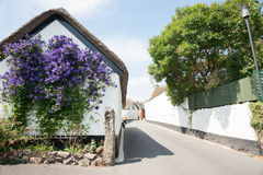 Purple flowers on white wall. Stock Images