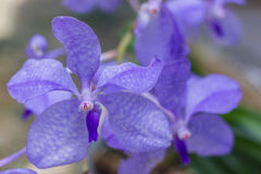 Purple flowers in wild nature Royalty Free Stock Photos