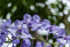 Purple flowers in wild nature Royalty Free Stock Photo