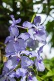 Purple flowers in wild nature Stock Image