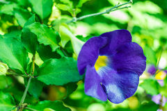 Purple flowers in wild nature Stock Photo