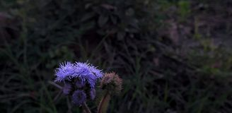 Purple flowers. Wild purple flowers in shady park royalty free stock photos