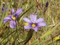 Purple flowers Stock Image