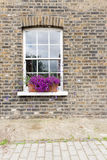 Purple Flowers in Window Box Stock Photo