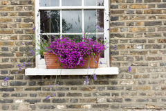 Purple Flowers in Window Box Stock Images