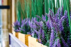 Purple flowers on a windowsill of a cafe royalty free stock photo