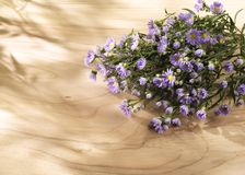 Purple flowers on a sunny wooden background Royalty Free Stock Photo