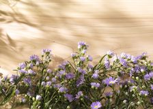 Purple flowers on a sunny wooden background Royalty Free Stock Photos