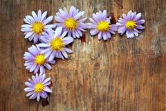 Purple flowers. On wooden background Royalty Free Stock Photo