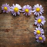 Purple flowers. On wooden background Royalty Free Stock Image