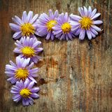 Purple flowers. On wooden background Royalty Free Stock Photography