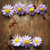Purple flowers. On wooden background Stock Image
