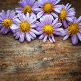 Purple flowers. On wooden background Stock Photography
