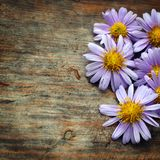 Purple flowers. On wooden background Stock Photos