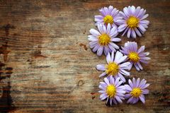 Purple flowers on wooden background Royalty Free Stock Images