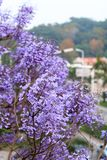 Purple flowers in Xiamen City Stock Photos