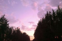 Purple forest in the evening, purple sky landscape. royalty free stock photography
