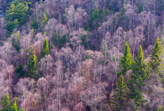Purple forest Royalty Free Stock Photo