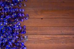 Purple foxglove flowers Royalty Free Stock Photos