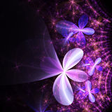 Purple fractal floral pattern Royalty Free Stock Photography