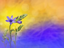 Purple freesia flowers blurred background stock photography